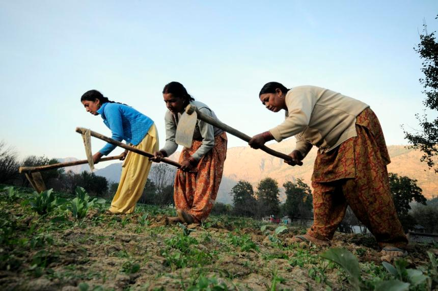 Indian farmers tilling the earth in Tihi
