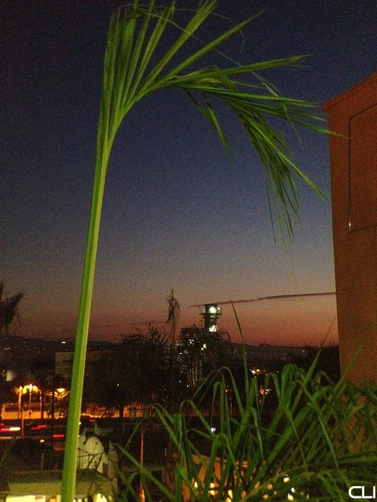 Cellphone image at dusk, resulting in ISO 800 with 1/15 sec exposure. Taken from a parking garage, the highlight on the palm is from car headlights. [©2012 Ed Elliott / Clearlight Imagery]